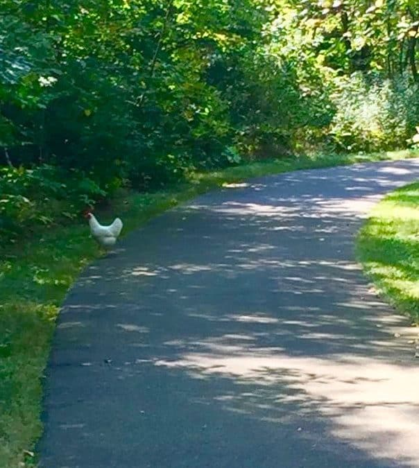 Sometimes, a Chicken: On the Path to Magic