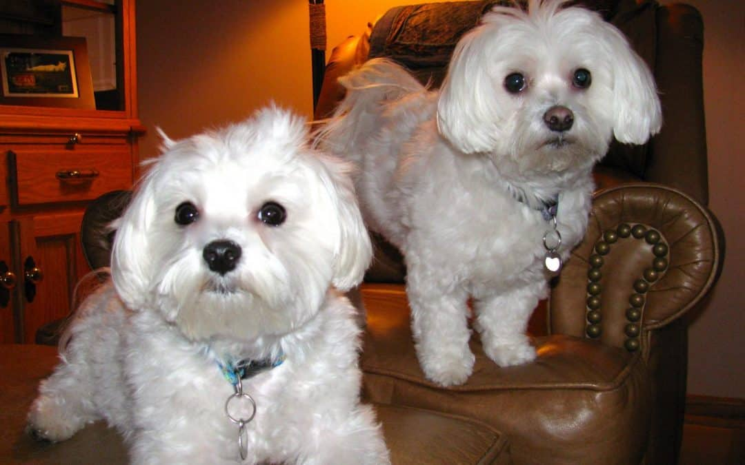 The Sweetest Dogs in the World: Lessons of the Heart