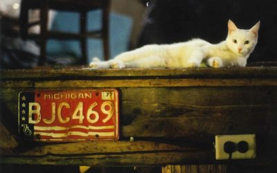 A Cold Street in Northampton: On White Cats, and Second Chances